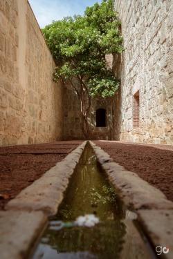 El Árbol al Final del Camino